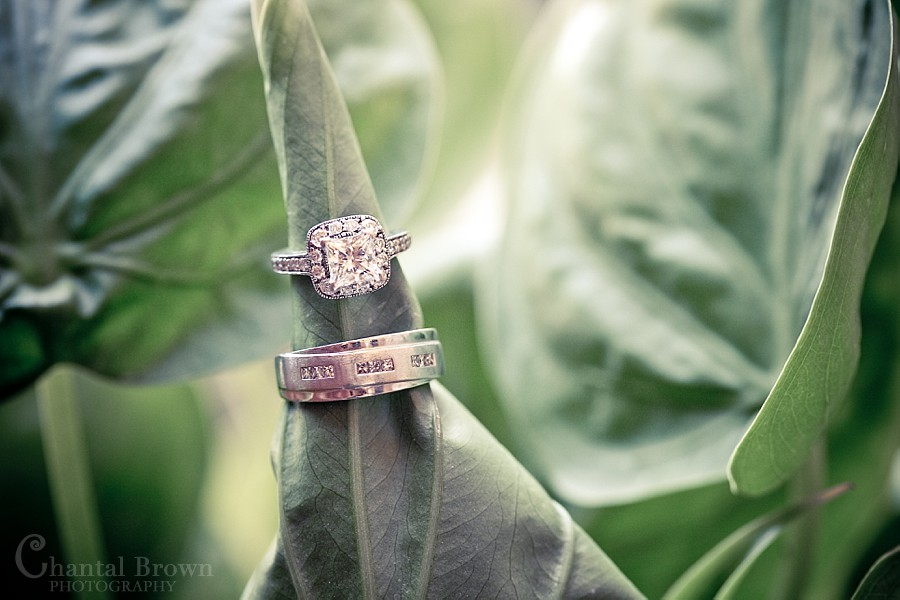 Dallas Ft Worth Cambodian Wedding diamond wedding rings on green plants