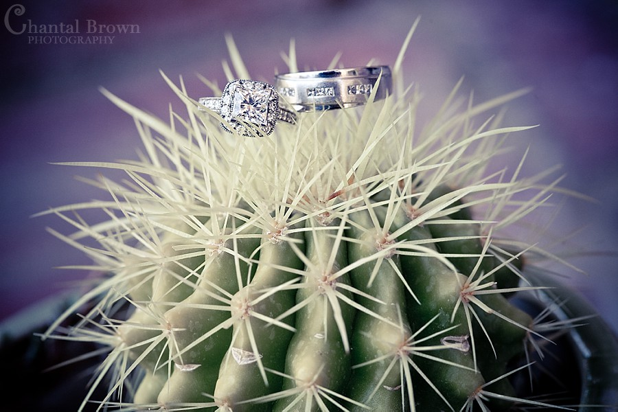 Dallas Ft Worth Cambodian Wedding diamond rings on cactus