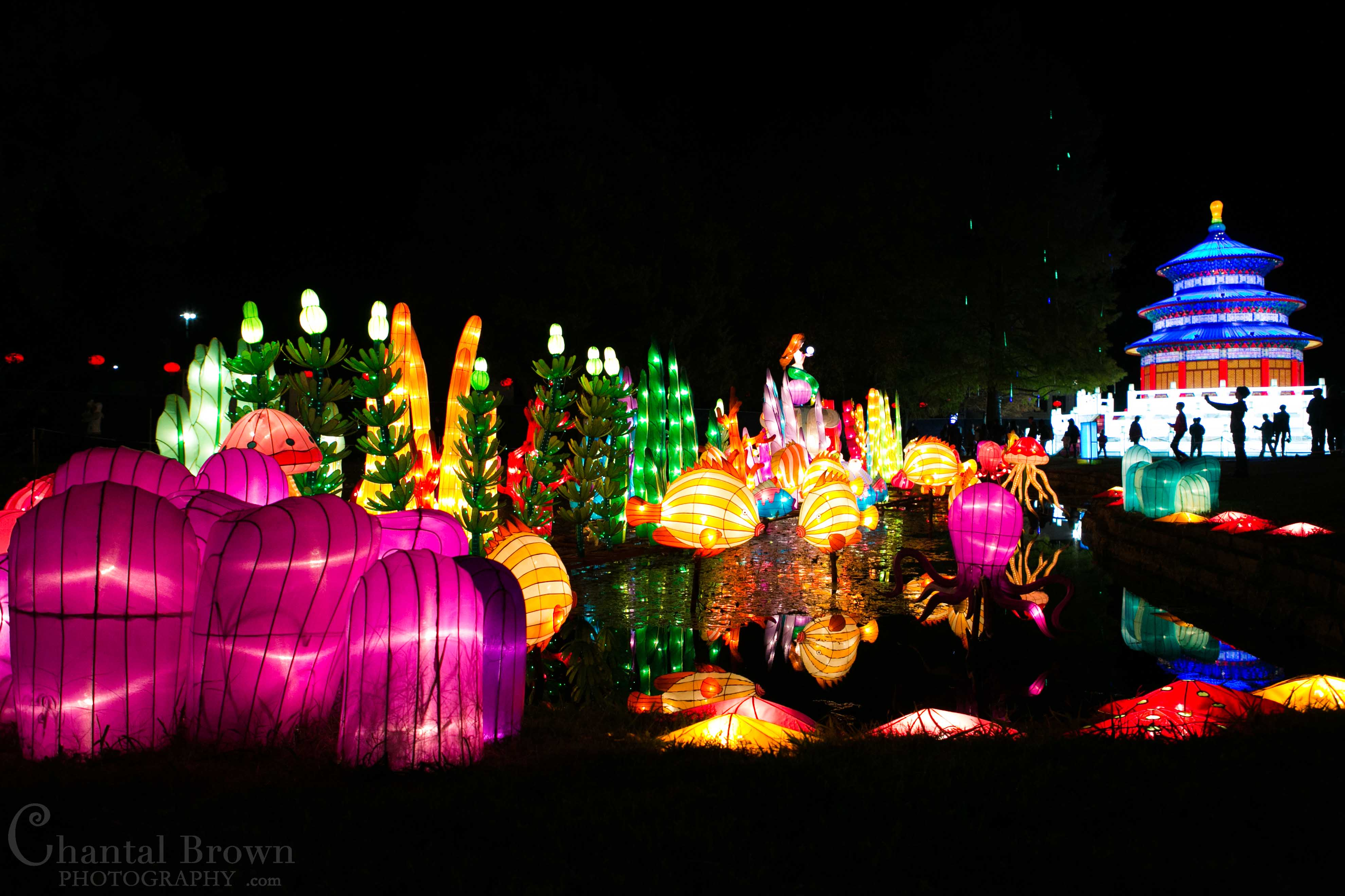 colorful ocean sea life fish lights at chinese lantern festival in dallas fair park photographer