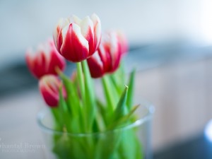 Stunning pink tulips flowers in crystal glass vase on Valentine's Day Dallas Portraits
